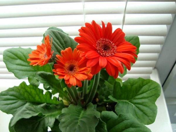 Trồng ngay 7 loại hoa hộ mệnh tháng cuối năm để hóa giải điều xấu cho gia chủ