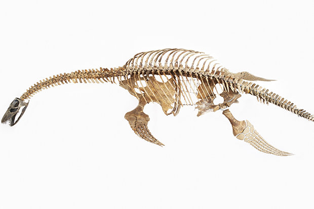 Xác loài vật 150 triệu năm tuổi giống hệt Quái vật hồ Lochness