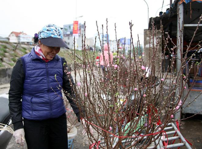 Đào nở sớm đắt và kém sắc, giá lên tới 450.000 đồng/cành người Hà Nội vẫn mua về chơi Tết Dương lịch