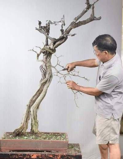 Cận cảnh: Lão nông Sài Gòn phù phép gốc củi thành cây cảnh nửa tỷ