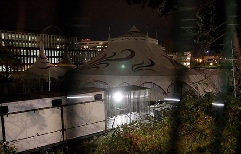 Hổ rạp xiếc xổng chuồng, gây náo loạn nhà ga ở Paris