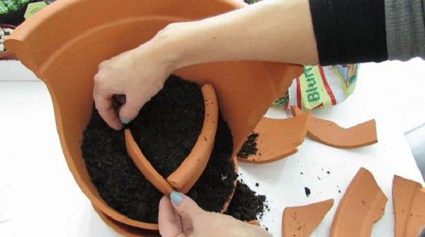 Không cần mua chậu mới, vẫn trồng được cả vườn cây cảnh mini tuyệt đẹp từ mảnh chậu vỡ
