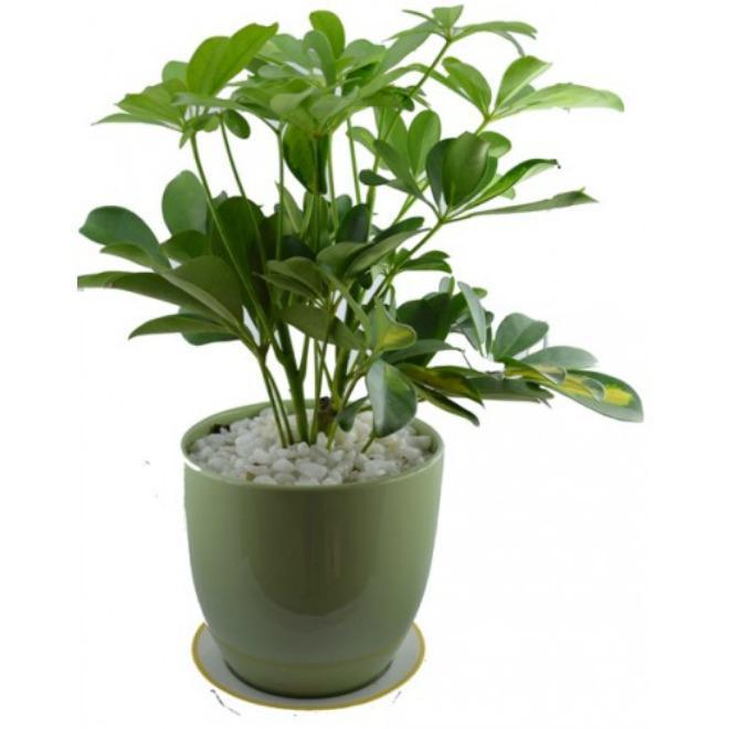 Muốn ngủ ngon và sâu, nhất định nên trồng những loại cây này trong phòng ngủ