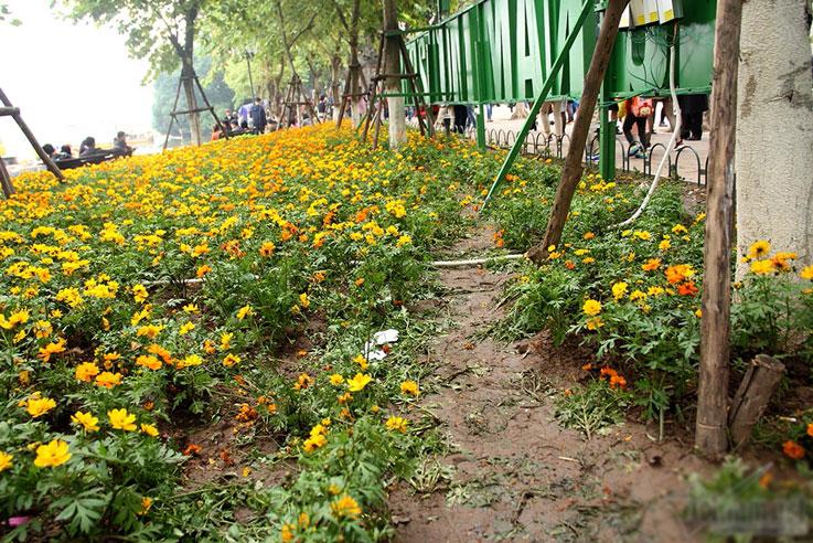 Vườn hoa hồ Gươm bị san phẳng sau đêm giao thừa