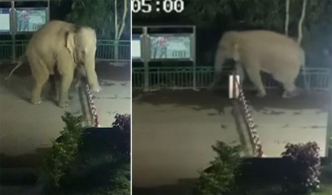Con voi vượt biên đi tìm thức ăn rồi quay về