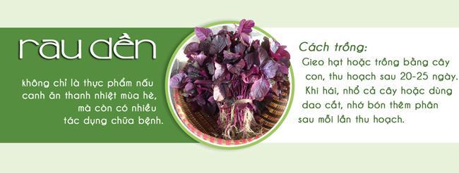 Tháng 3,4,5: Trồng rau gì vừa hợp mùa vừa có rau ăn đã miệng từ xuân sang hè