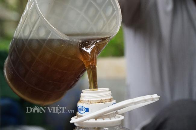 Ảnh, clip: Nuôi ong du mục thu hàng trăm triệu ở Hưng Yên