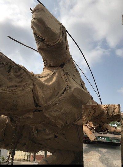 Chủ cây quái thú ở Đắk Lắk: Người ta đưa tôi sấp giấy bảo ký