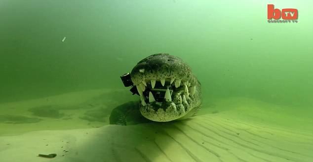 Bỏ 150 triệu để bơi cùng cá sấu khổng lồ