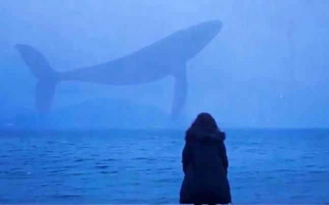 Trào lưu chết chóc Cá voi xanh có gì hấp dẫn giới trẻ đến thế?