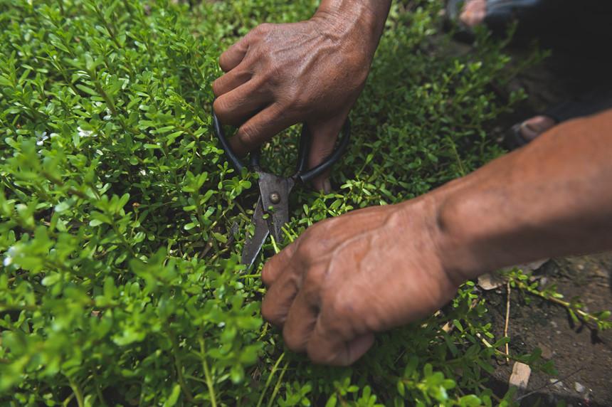 Cuộc sống nông dân giữa nơi xa hoa mới của Sài Gòn