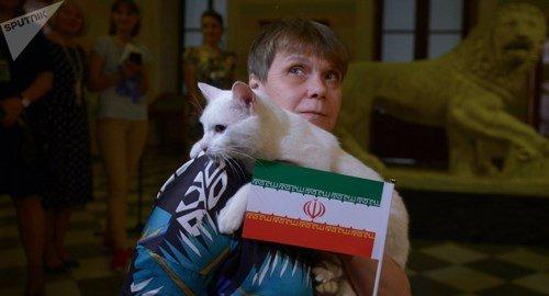 Mèo Achilles gây sốt, tiếp tục đoán như thần kèo World Cup