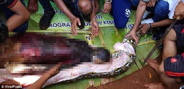 Mổ bụng trăn khổng lồ, kinh hãi phát hiện thi thể người phụ nữ nằm gọn bên trong