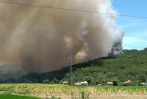 Rừng thông bốc cháy giữa nắng nóng 40 độ