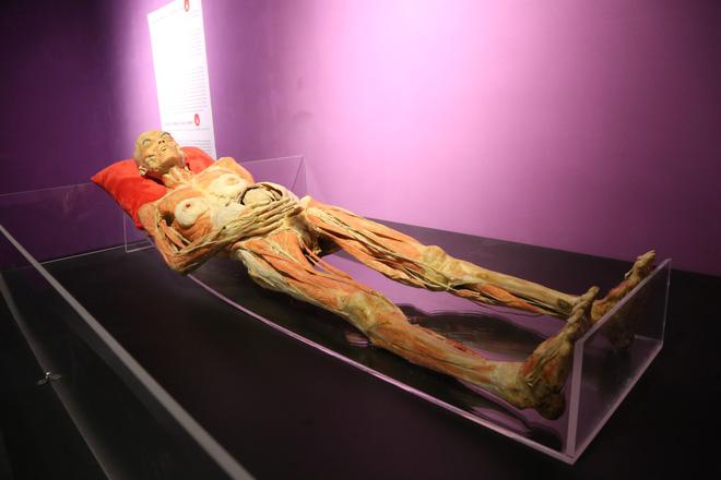 Ban tổ chức triển lãm xác người thật ở Sài Gòn: Phôi thai, thai nhi là mẫu hiến tặng được bố mẹ đồng ý