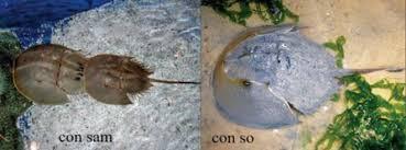 Ngộ độc chết người chỉ vì nhầm lẫn so biển với sam biển: Cách phân biệt chuẩn xác theo hướng dẫn của chuyên gia