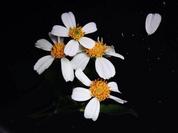 Đằng sau bức ảnh hoa xuyến chi nghìn like khiến dân sống ảo nể phục
