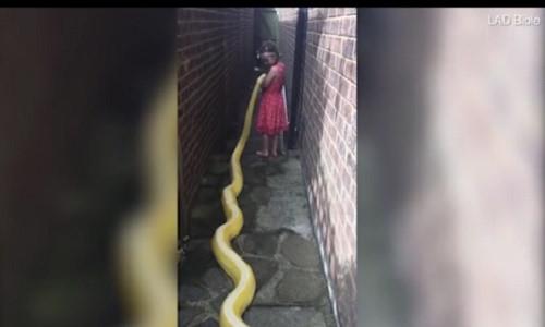 Rùng mình bé gái 5 tuổi thân mật với trăn khổng lồ