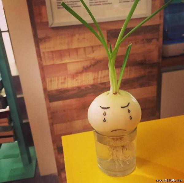 Đam mê bonsai nhưng kinh tế eo hẹp, cô nàng trồng củ khoai lang và đem lại kết quả bất ngờ