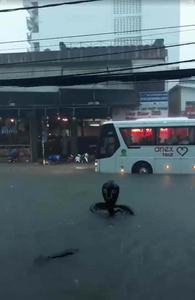 Hình ảnh rắn hổ mang xuất hiện trên đường phố Nha Trang khiến nhiều người kinh hãi