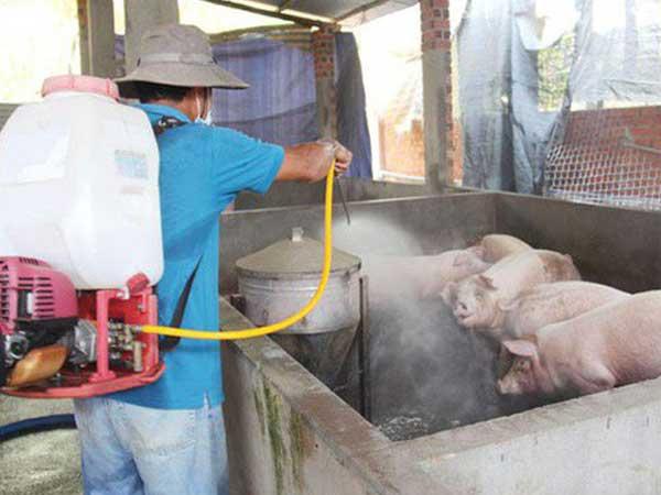 Virus gây bệnh dịch tả lợn châu Phi có sức đề kháng cao, có thể tồn tại lâu ở ngoài môi trường