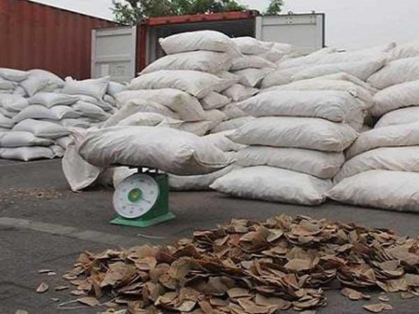 Bắt giữ hơn 8 tấn vảy tê tê tại cảng Hải Phòng