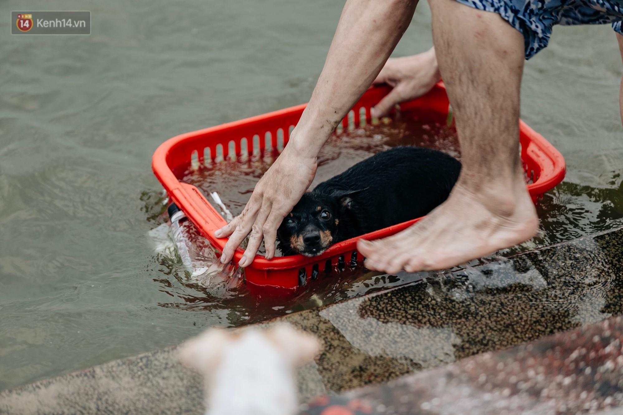 Hà Nội oi nóng ngộp thở, nhiều người mang theo cả thú cưng ra Hồ Tây tắm bất chấp biển cấm - 20