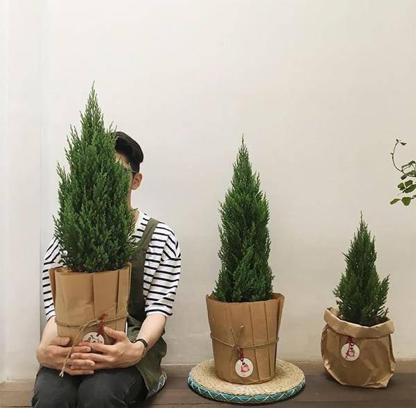 Mệnh Mộc hợp cây gì rước lộc vào nhà? - 4