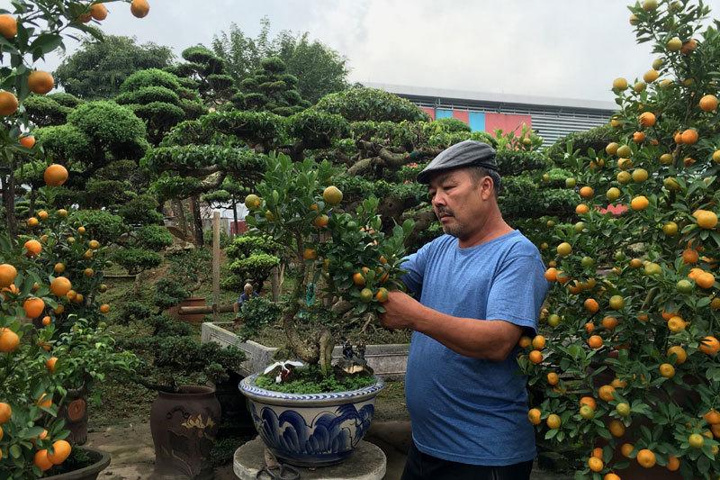 Quất 'thăng tiến' bonsai gây sốt, giá chục triệu hút khách dịp Tết - 9