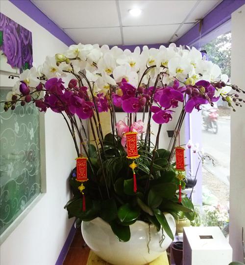 4 loại hoa nên chơi Tết Tân Sửu 2021 để cả năm tài lộc chảy vào nhà cuồn cuộn - 1
