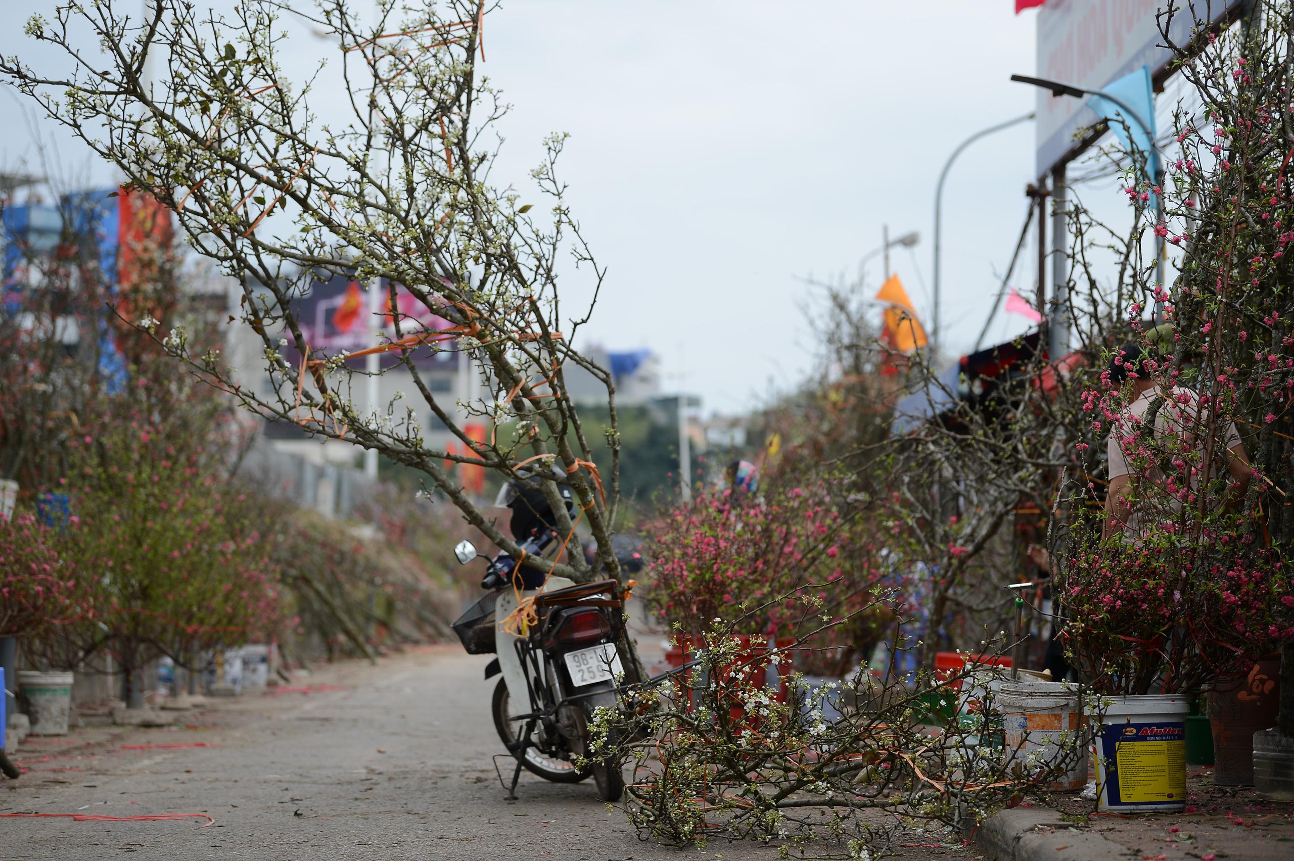 Hoa lê rừng xuống phố ngày đầu năm mới khiến người Hà Nội mê mẩn - 5