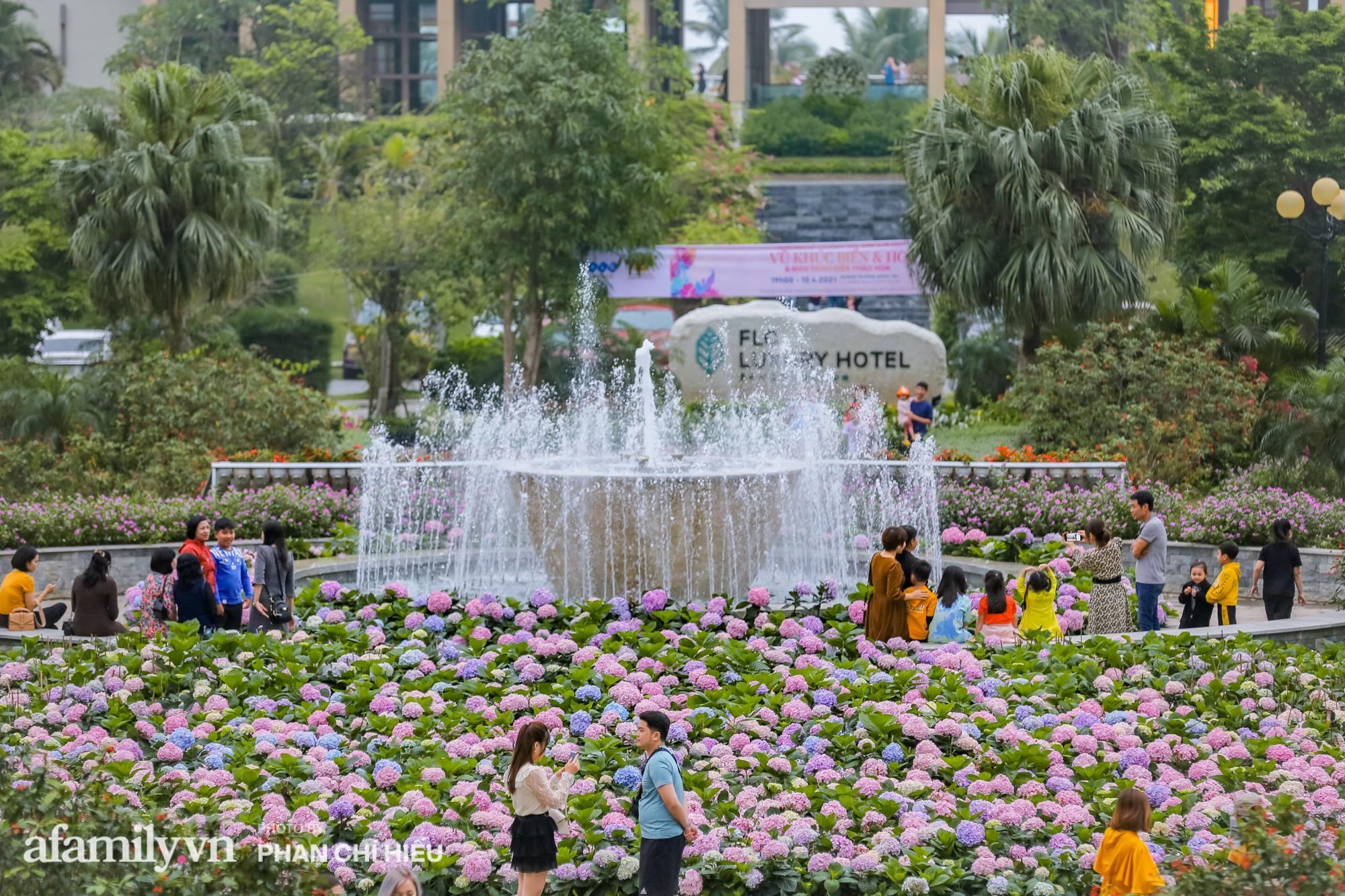Vườn hoa cẩm tú cầu 'siêu to khổng lồ' ở Sầm Sơn hút hàng nghìn người tìm tới chụp ảnh vào cuối tuần, dù chưa Tết nhưng vẫn được chiêm ngưỡng pháo hoa bắn ngợp trời - 5