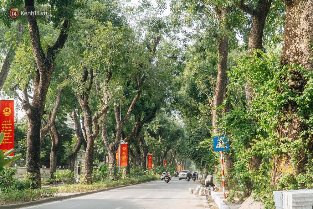 Những tuyến phố có hàng cây xanh được quy hoạch 100 năm trước ở Hà Nội giờ ra sao? - 18