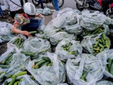 Sinh viên đội mưa 'giải cứu' hàng tấn dưa chuột cho nông dân xứ Nghệ