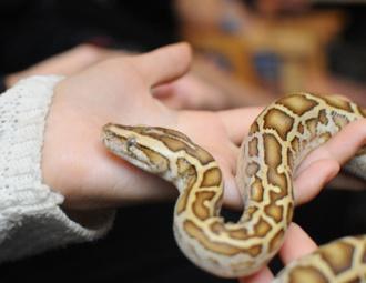Ảnh: Trai xinh gái đẹp bỏ tiền triệu mua rắn, thằn lằn làm thú cưng
