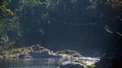 Không biết bay, nhện làm thế nào để giăng tơ khi khoảng cách hai đầu bị ngăn bởi sông suối?
