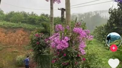 Trầm trồ vườn hoa lan mọc trên thân cây cau thành từng chùm, dân mạng mải miết ghen tị vì gia chủ 1không có gì ngoài đất lẫn tiền' - 1